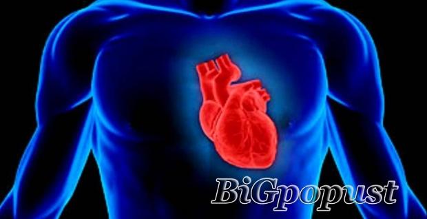 1999, rsd, za, , ultrazvuk, srca, , u, specijalistikoj, internistikoj, , ordinaciji, cardio, mm